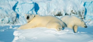 Foredrag om Svalbard