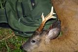 Trofæaften i jagtforening