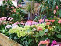 Planteforum fejrer Mors Dag