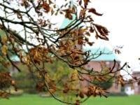 Efterårsfarver i Ringsted