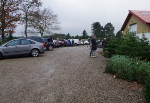 Foto: Højbo Juletræsplantage
