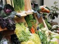 Når du køber danske økologiske fødevarer sparer du litervis af grundvand for mødet med sprøjtegift. Foto: ABW