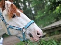 Hest og vogn?