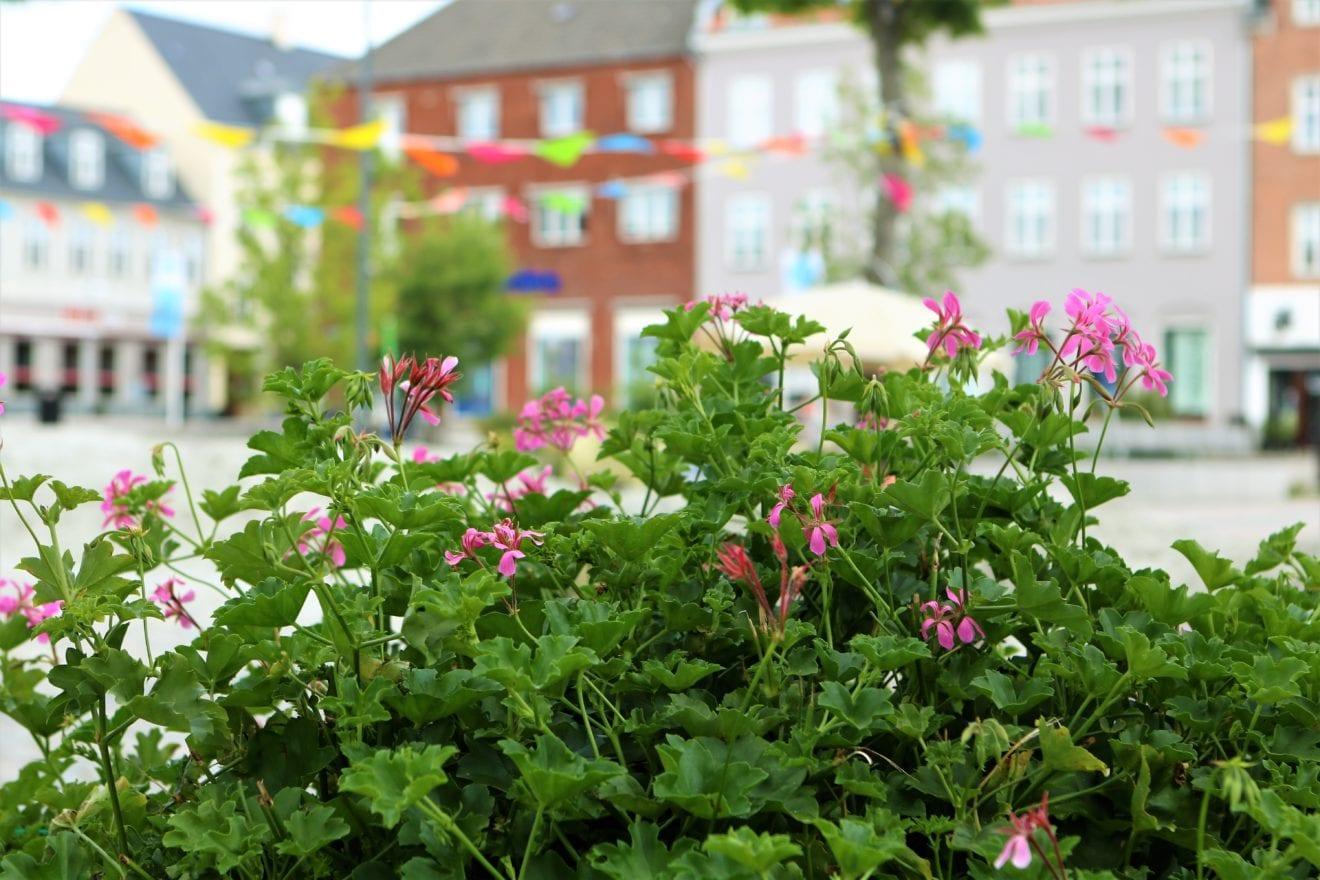 Vil du være influencer eller ambassadør for Ringsted Kommune?